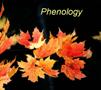 Phenology Image